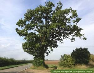 Longcot vintage oak